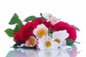 Bouquet of beautiful wild roses — Stock Photo