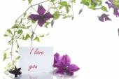 Beautiful blooming clematis  — Stock Photo