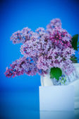 Beautiful spring lilac — Stock Photo
