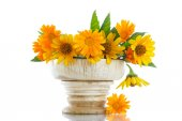 Mazzo di fiori con margherite di estate — Foto Stock