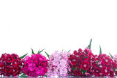Bright bouquet of carnations — Stock Photo