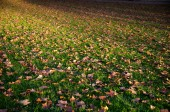 Autumnal covered grassland — Stock Photo