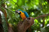 Macaw parrot in jungles — Stock Photo