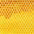 Natural honey in honeycomb background — Stock Photo #56728387