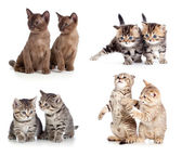 Cats or kittens pair set isolated — Stock Photo