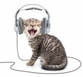 Singing kitten cat in wired headphones listening to music — 图库照片