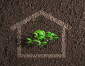 Ecological live house growing concept — Stock Photo