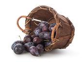 Ciruelas en una cesta — Foto de Stock