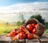 Tomatoes on the table — Stock Photo