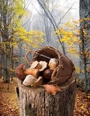 Mushrooms on stump — Stock Photo