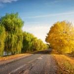 Road through autumn forest — Stock Photo #56645629