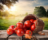 Tomatoes and landscape — Stock Photo