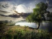 Willow and moon — Stock Photo