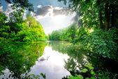 Łabędzie na spokojna rzeka — Zdjęcie stockowe