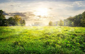 Green meadow at sunrise — Stock Photo