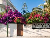 Mediterranean flower garden — Stock Photo