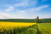 Cultivated farm fields — Stock Photo