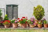 Windows and doors decorated with flower pots — Stock Photo