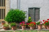 Windows and doors in an old house decorated with flower — Stock Photo