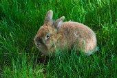 Baby pretty Rabbit — Foto Stock