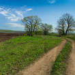 Country road in summer day — Stock Photo #63891385