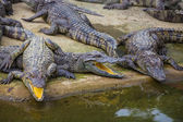 Crocodile Farm in Dalat — Stock Photo