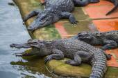 Crocodile Farm in Dalat. — Stock Photo