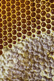 Honeycombs with honey texture — Stock Photo