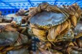Crabs bind in market — Stock Photo
