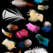 Collection of different color feathers. — Stock Photo #56608255