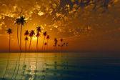 Tropic island at sunset — Stock Photo
