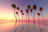 Tropical sunset pink — Stock Photo