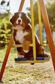 Dog on teeter — Stock Photo