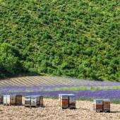 Beehive close to lavander field — Foto de Stock
