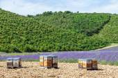Beehive close to lavander field — Stockfoto