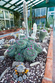 サボテンの温室効果 — ストック写真