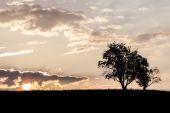 Trees at Morning — Stock Photo