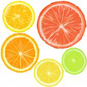 Set of citrus slices — Stock Vector