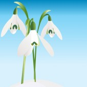 Background with snowdrop — Stock Vector