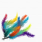 Colorful feathers background — Stock Vector