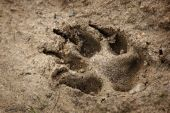 Animal traces on the earth  — Stock Photo