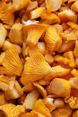 Sliced mushrooms ,chanterelle mushroom — Stock fotografie