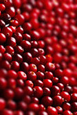 Ripe cranberries for background — Stock Photo