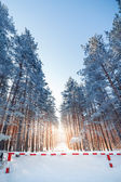 Fencing prohibiting travel to snow-covered forest. — Stockfoto