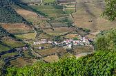 Vineyars in Douro Valley — Stock Photo