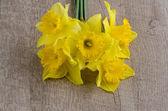 Jonquil blommor — Stockfoto