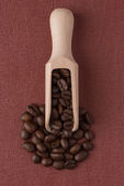 Wooden scoop with coffee beans — Stock Photo