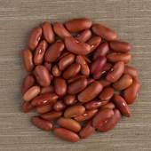红豆的圈子 — 图库照片