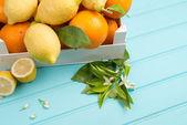 Citrus fresh fruits — Stock Photo