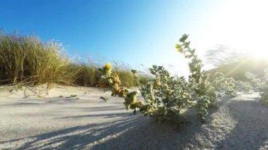 砂丘 — ストックビデオ